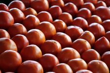 Free Home Grown Tomatoes Stock Image - 28063911
