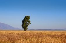 Free Single Tall Tree Royalty Free Stock Images - 28065139