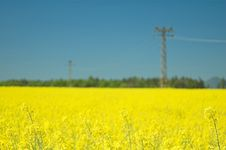 Free Rape Field Stock Photos - 28069873