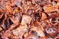 Free Fried Pork Stock Photos - 28079383