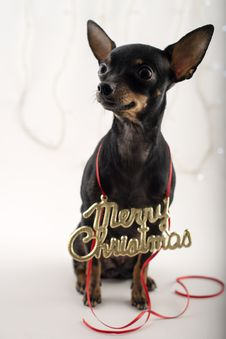 Free Dog As A Gift On New Year And Christmas Stock Photo - 28076000