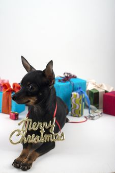 Free Dog As A Gift On New Year And Christmas Stock Images - 28076134