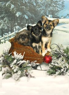 Free Three Pups In A Sleigh Stock Photo - 28076780