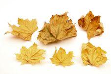 Free Single Autumn Leaf Royalty Free Stock Image - 28078096