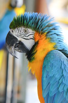 Free Parrot Royalty Free Stock Photo - 28084915