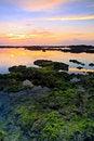 Free Lichen Stock Image - 28094131
