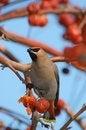 Free Bird Stock Photography - 28099022