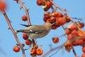 Free Bird Stock Photo - 28099030