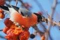 Free Bird Royalty Free Stock Photos - 28099038