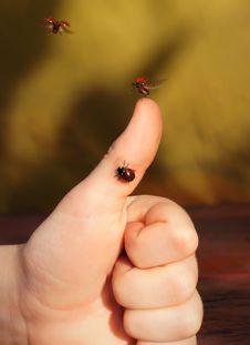 Free The Chronicle Of A Flying-up Ladybug Royalty Free Stock Image - 28092486