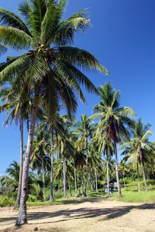 Free Coconut Trees Stock Photography - 28094062