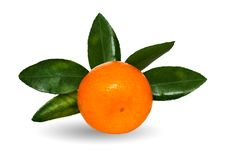 Juicy Tangerine With Green Leaflets Stock Image