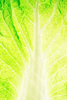 Free Leaf Of Salad Stock Photo - 28097580