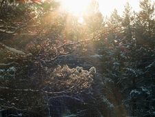 Free Winter Forest Stock Photography - 28099432