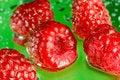 Free Raspberry Royalty Free Stock Image - 2819436