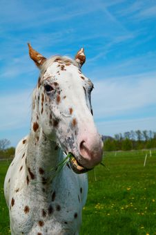 Free Horse Stock Photography - 2810432