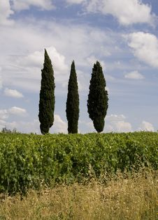 Free Cypress Trees In Tuscany Stock Image - 2811371