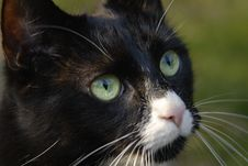 Free Cat With Green Eyes Stock Photos - 2811433