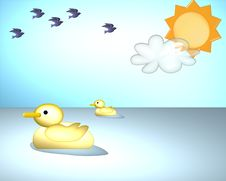 Free Duck Stock Photo - 2812960
