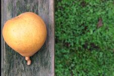 Free Pear Stock Image - 2813981