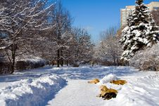 Free Dogs Lying At Snow Stock Images - 2814514
