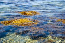 Free Picturesque Sea Seaweed Royalty Free Stock Photo - 2814535