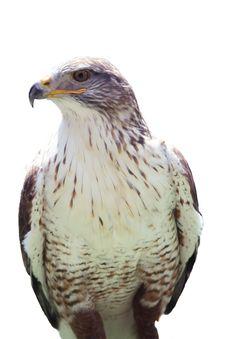 Free Eagle Isolated Stock Photography - 2814682