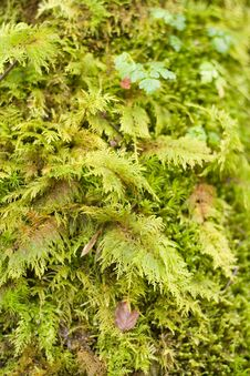 Free Green Moss On Tree S Bark Royalty Free Stock Photography - 2814687