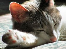 Free Cat Nap Royalty Free Stock Images - 2815029