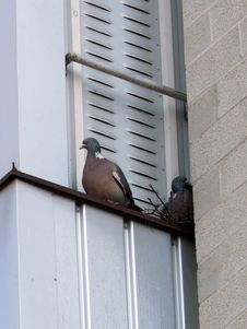 Free Doves On Balcony Royalty Free Stock Images - 2815279