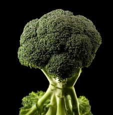 Free Broccoli Royalty Free Stock Photos - 2815468