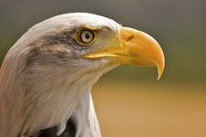 Free American Eagle Stock Images - 2816404
