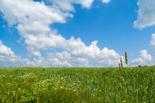 Free Green Field Royalty Free Stock Photography - 2816687