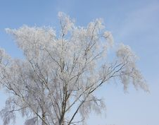 Free Winter Tree Royalty Free Stock Photos - 2816778