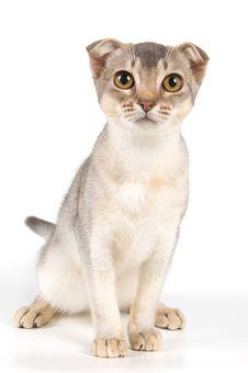 Free Kitten In Studio Royalty Free Stock Image - 2816886