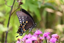 Free Hungry Butterfly Stock Image - 2816941