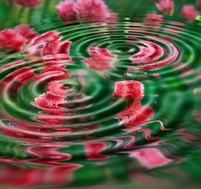Flowers Under Rippled Water Royalty Free Stock Images