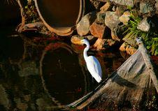 Free Heron Royalty Free Stock Images - 2817479