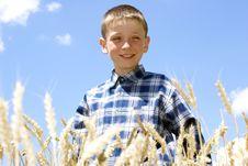 Free Harvest Stock Photos - 2817583