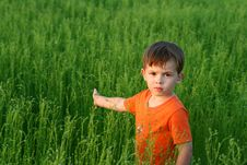 Sight Of The Boy Among A Green Stock Image