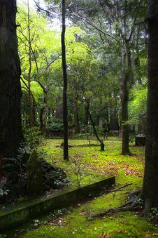Free Oriental Garden Royalty Free Stock Photo - 2819285
