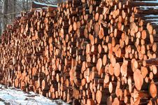 Free Woodpile Royalty Free Stock Images - 2819319