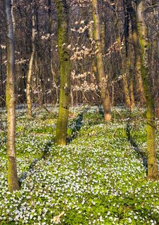 Free Spring Forest - Sunny Day Royalty Free Stock Photos - 2819508