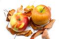 Free Autumn Apples And Yellow Leaves Royalty Free Stock Image - 28108456