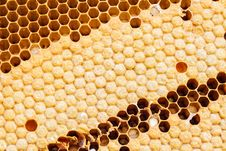 Free Yellow Beautiful Honeycomb Background Royalty Free Stock Photo - 28101485