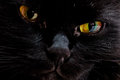 Free Portrait Of The Muzzle Of A Black Cat Stock Images - 28112044