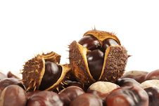 Free Chestnuts In Shell On White Background Royalty Free Stock Photography - 28119917