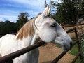 Free White Horse Side View Royalty Free Stock Photos - 28128448