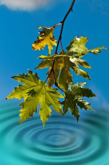 Wet Leaves Royalty Free Stock Image