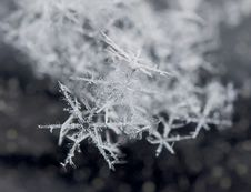 Free Snowflake In December Royalty Free Stock Photos - 28126568